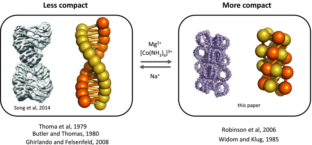 A metastable structure for the compact 30-nm chromatin fibre. Wu, C.,  McGeehan, J.E. and Travers, A. (2016) FEBS Lett 590, 935–942