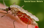 The FEBS Journal Special Issue on Malaria is out!
